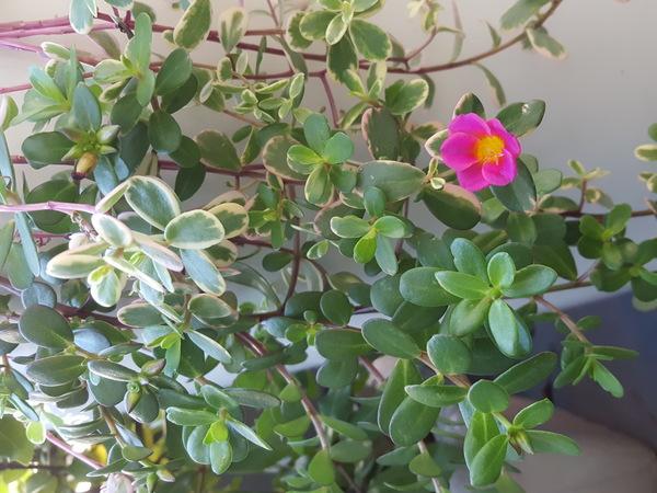 紅葉🍁しない植物🍁大阪サロン