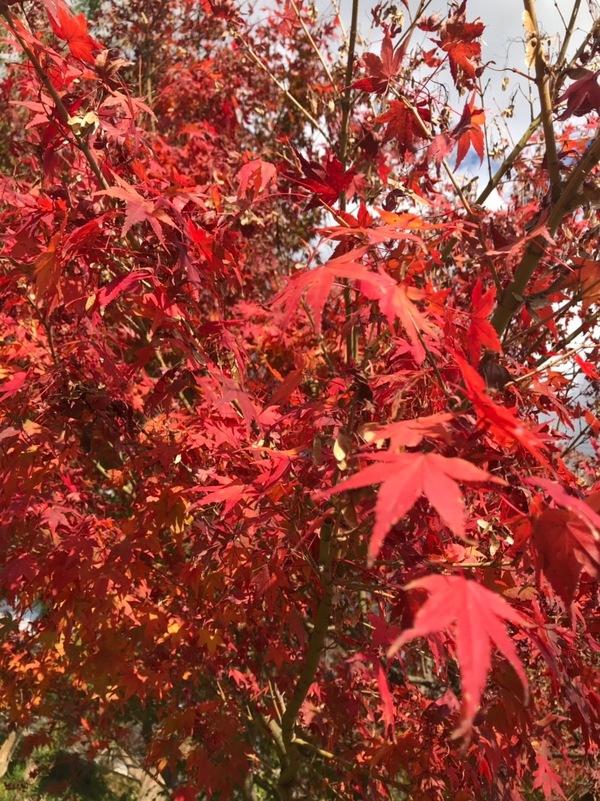 秋は紅葉!!季節を感じにin嵐山&清水寺!!