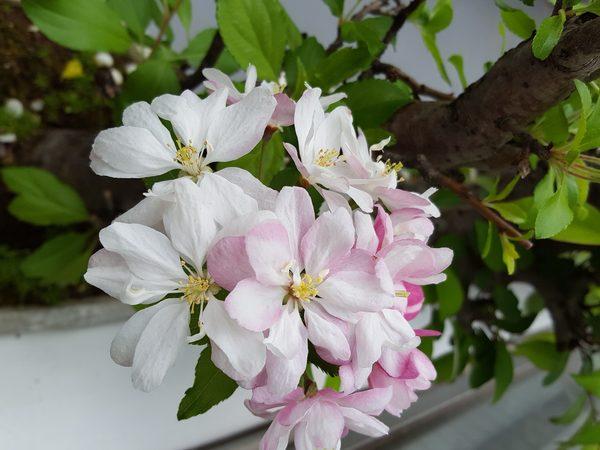 大阪ヘアーメイクシャワーのお花見🌸🌸